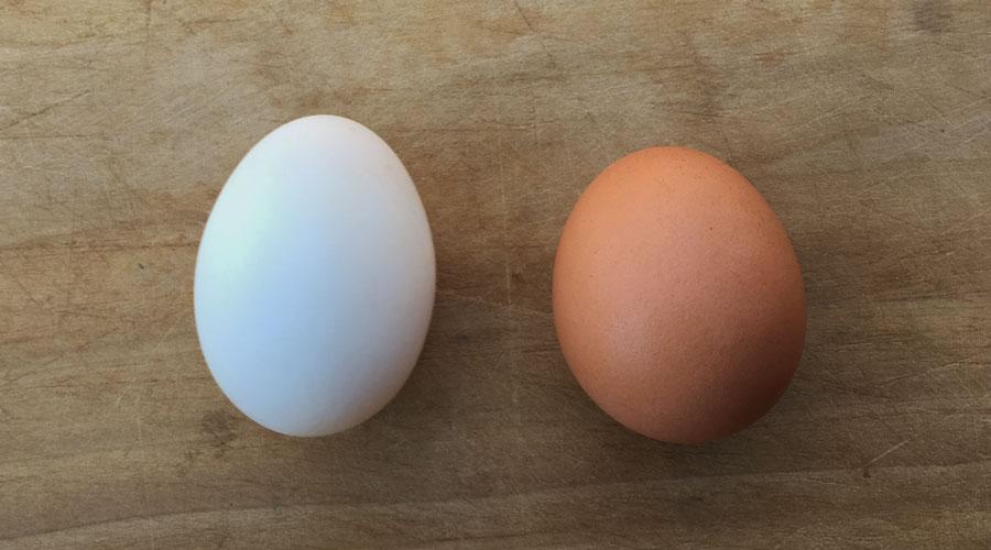 تخم مرغ و تخم اردک